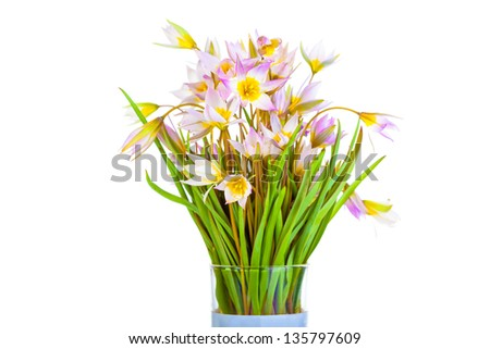 First spring flowers isolated on white