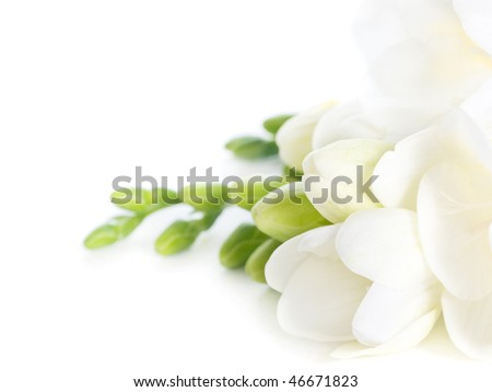 first spring flowers on white background - stock photo