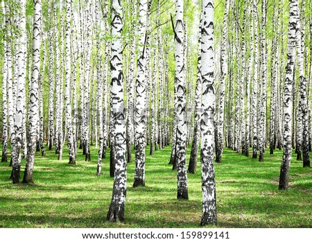 First spring greens in birch grove - stock photo