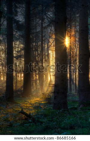 First sunlight in a dark forest - stock photo