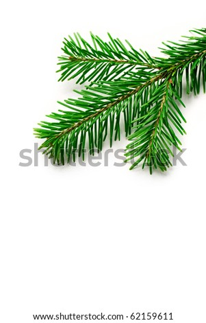 Firtree isolated on white - stock photo