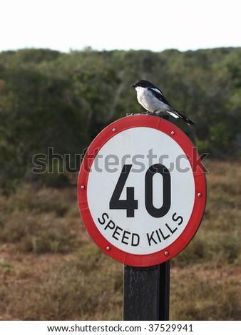 Fiscal shrike watching over speeding motorists. - stock photo