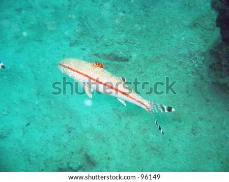 Fish - stock photo