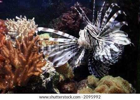 fish and aquarium - stock photo