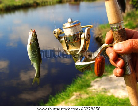 Fish and mans hand - stock photo