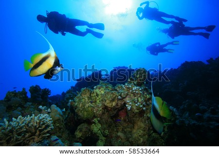 Fish and Scuba Divers - stock photo