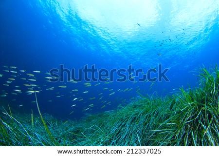 Fish and Sea Grass Underwater - stock photo