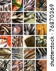 Fish and seafood collage - stock photo