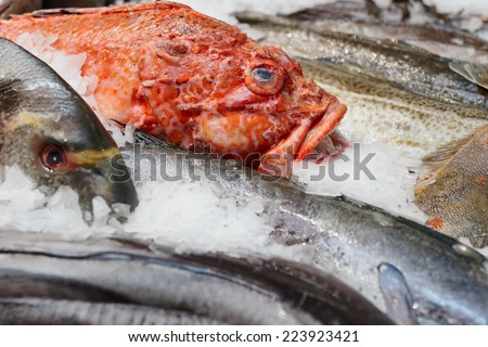 Fish and seafood on fish market  - stock photo