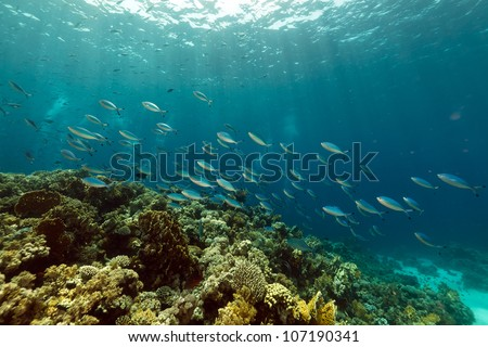 Fish and tropical reef in the Red Sea. - stock photo