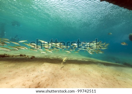 Fish and tropical reef in the Red Sea - stock photo
