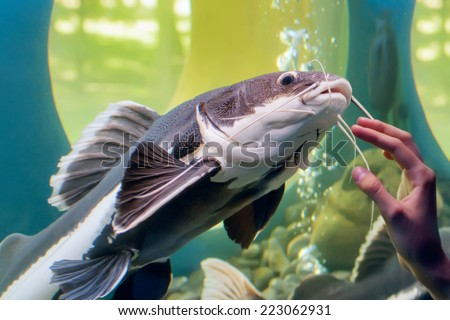 fish aquarium - stock photo