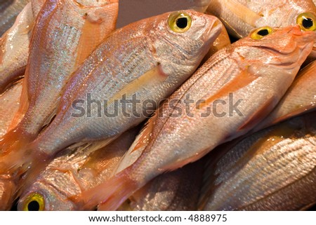 Fish at market for sale - stock photo
