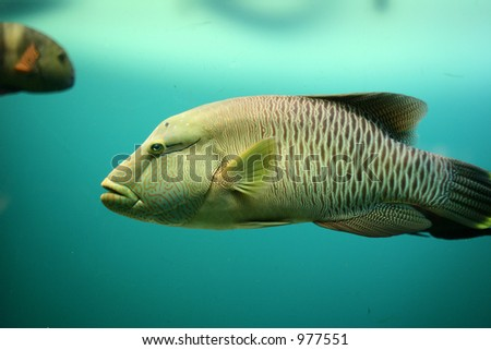 fish at  the aquarium in denmark - stock photo