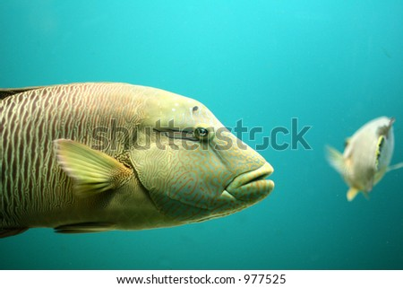 fish at  the aquarium in denmark (image contains some noise) - stock photo