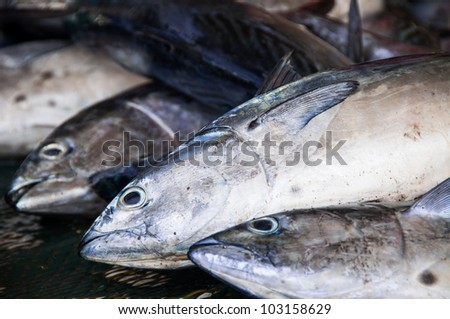Fish at the fish market in Muscat, Oman - stock photo