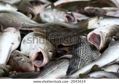 fish at  the return of fisher in denmark - stock photo
