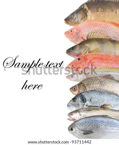 Sea perch stock images royalty free images vectors for Ocean perch fish