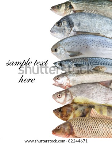 Fish background on white - stock photo