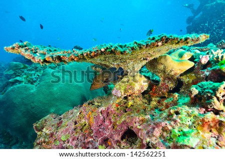 Fish beneath table coral branch - stock photo