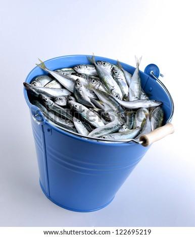 fish bucket - stock photo