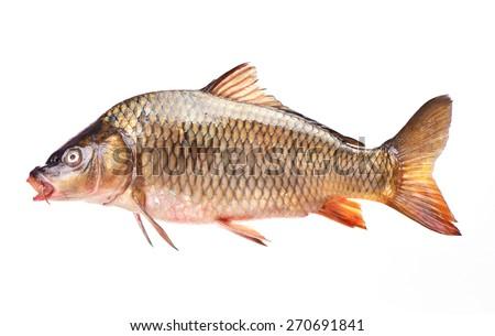 Fish carp - stock photo