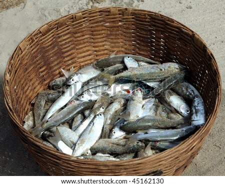 Fish catch - stock photo