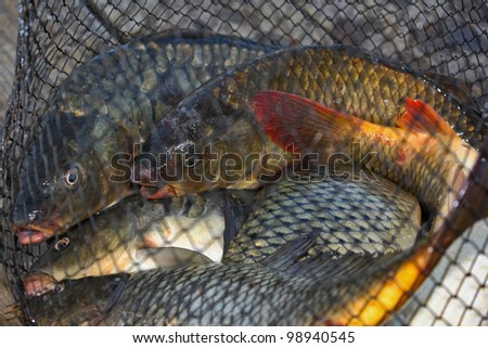 fish caught in the cages for fishing on the pier - stock photo