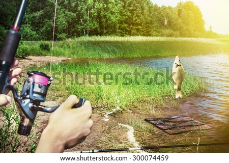 fish caught on a hook on the background of the lake. Focus on the trough and fish - stock photo