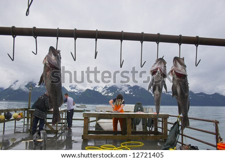 bait station stock photos images pictures shutterstock