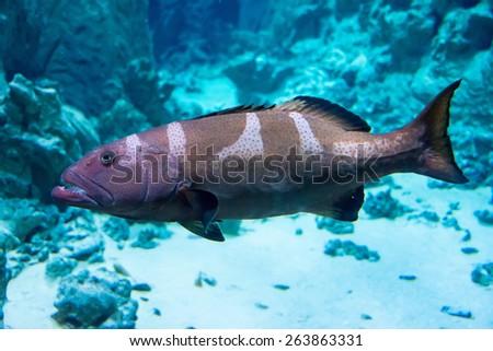 Fish close-up in aquarium - stock photo