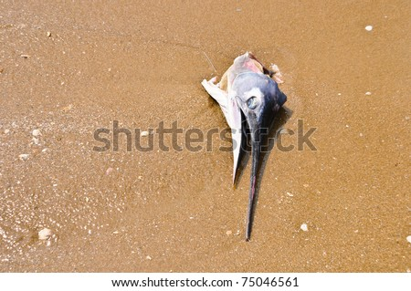 fish deaths on the sand - stock photo