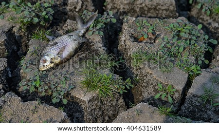 Fish died on cracked earth, plants - stock photo