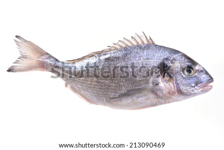 Fish dorado - stock photo