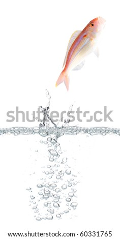 Fish escaping - stock photo