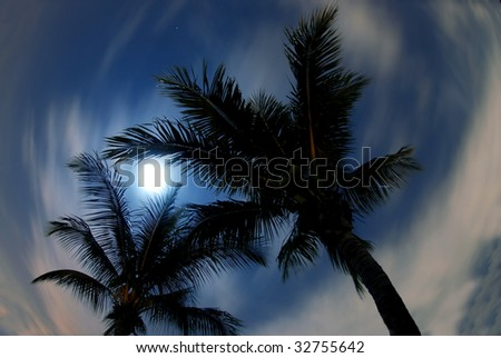 fish-eye view of palms and moon