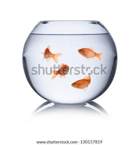 fish family in fishbowl - stock photo