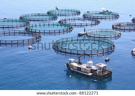 fish farm - stock photo