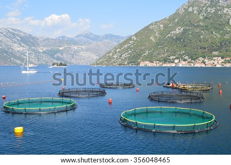 Fish farm in the bay of Kotor, the old town of Perast seen on the opposite side of the bay - stock photo