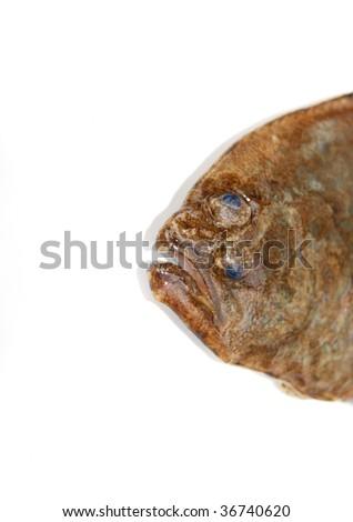 Fish, Flounder's face on white background - stock photo