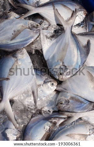Fish for sale at fresh food market in Thailand.  - stock photo