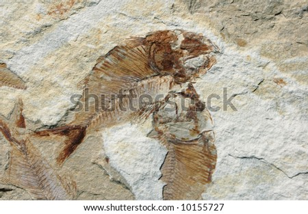 Fish Fossil on a stone - stock photo