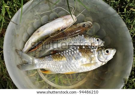 Fish Fresh Water Grass Bowl Outdoor - stock photo