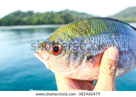 Fish from Andaman sea.