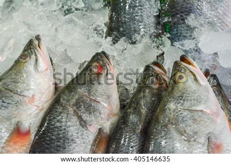 Fish head close-up - stock photo