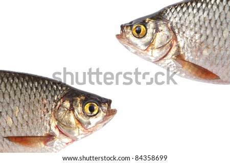 Fish head isolated on white background