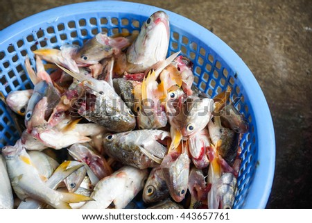 Fish heads in the basket - Thailand fish Market - stock photo