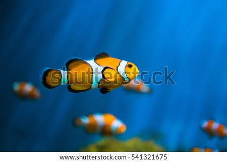 Fish in an aquarium.