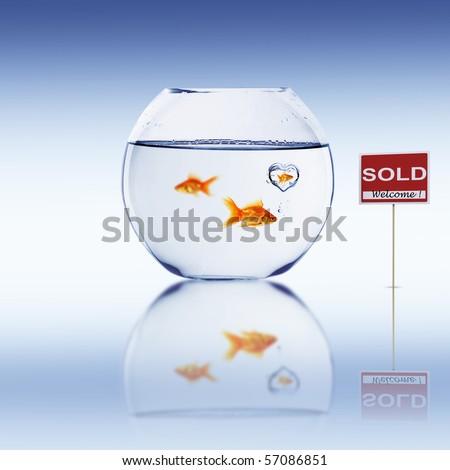 Fish in an aquarium - stock photo