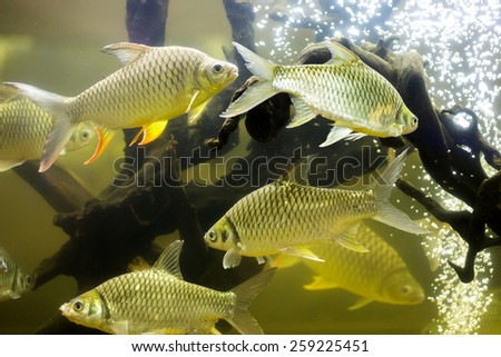 Fish in aquarium - stock photo